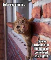 selfish-cat